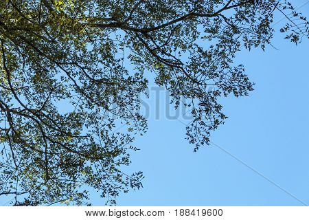Under View Of Tree Branches Against Blue Cloudy Sky