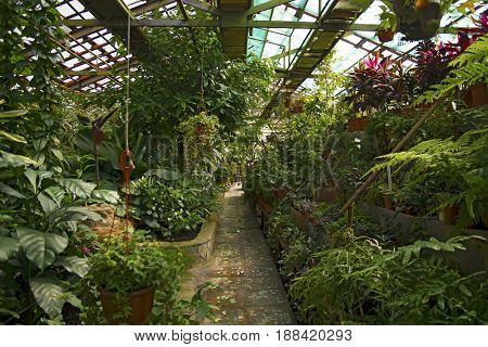 Botanical Garden of everywhere there are various very bright beautiful flowers and plants. mirrored ceiling