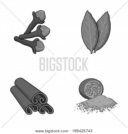 Clove, bay leaf, nutmeg, cinnamon.Herbs and spices set collection icons in monochrome style vector symbol stock illustration flat.