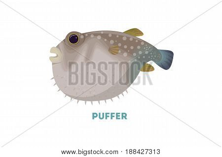 Isolated puffer fish on white background. Exotic wild fish.