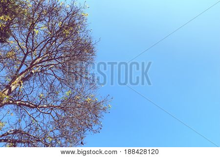 branches of tree with bright blue sky
