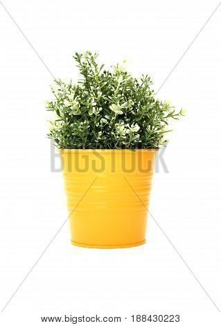 Nice synthetic plant in yellow pot on white background