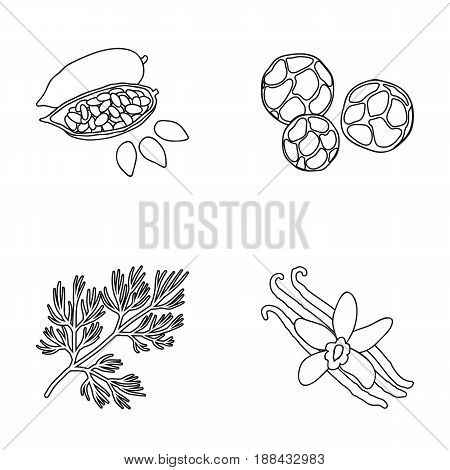 Fried cacao beans, dill, black pepper, vanilla.Herbs and spices set collection icons in outline style vector symbol stock illustration .