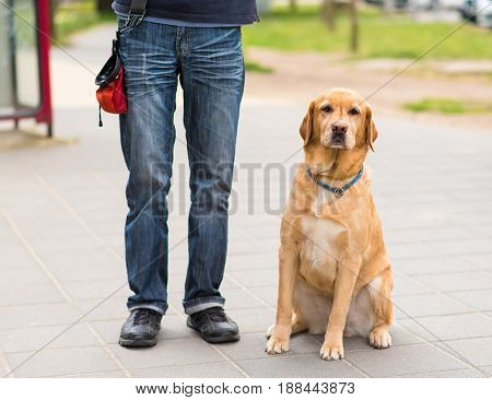 Labrador Dog And Owner In The City