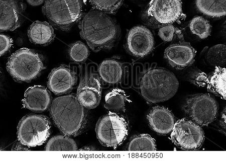 Wood Logs Pile. Wood Logs Texture Background