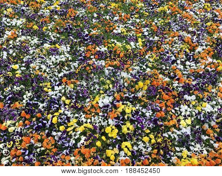 Many decorative beautiful colorful flowers in one place