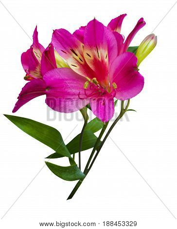 bouquet of flowers. Alstroemeria. Bouquet of flowers Alstroemeria. Flowers Alstroemeria. Bouquet of alstroemeria flowers isolated on white background