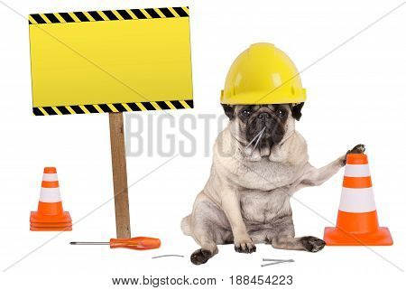 pug dog with yellow constructor worker safety helmet and cone plus warning sign on wooden pole isolated on white background