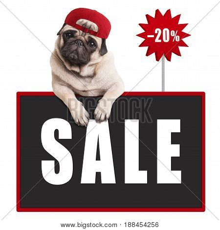 cute pug puppy dog wearing red cap hanging with paws on blackboard sign with text sale and 20 percent off isolated on white background