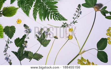 Pressed and dried flowers isolated on white background. For use in scrapbooking floristry or herbarium.