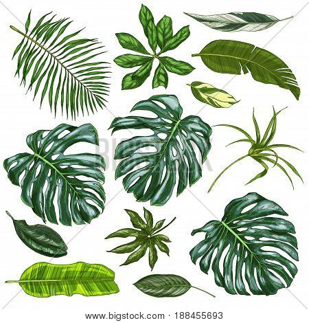 Realistic full color tropical leaves, vector illustration