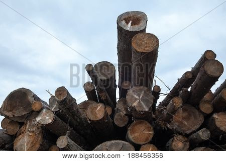 Pile of cut logs against the cloudy sky background