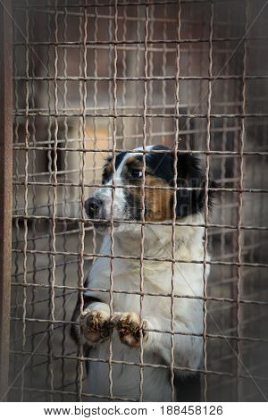 Sad abandoned dog behind a fence sitting and looking for adopters