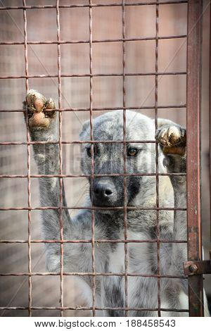 Sad abandoned dogs from dog's shelter  looking for adopters