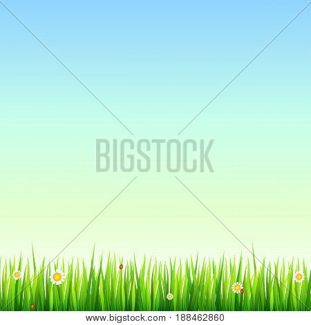 Green, natural grass border with white daisies, camomile flower and small red ladybug. Template for your design or creativity.