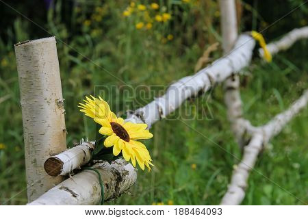 Birch fence with nice decorative yellow flower