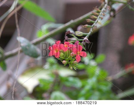 peqeñas fores rosa con pistilos amarillo, mas hojas