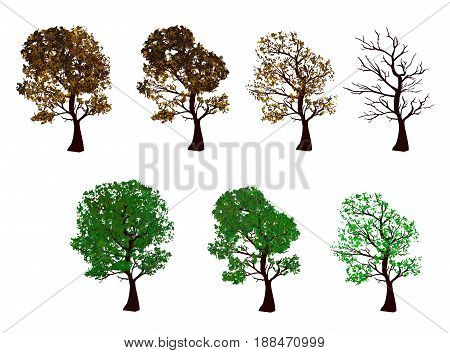 The set of trees, four seasons. Trees isolated on white background. Vector illustration. Horizontal location.