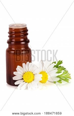 bottle with essential oil and fresh chamomile flowers isolated on white background.