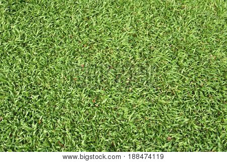 A Image Close-up. Green grass taxture background