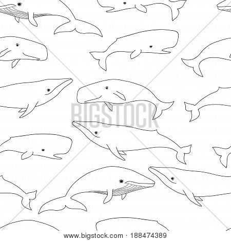 Pretty Seals seamless pattern. Vector marine background.
