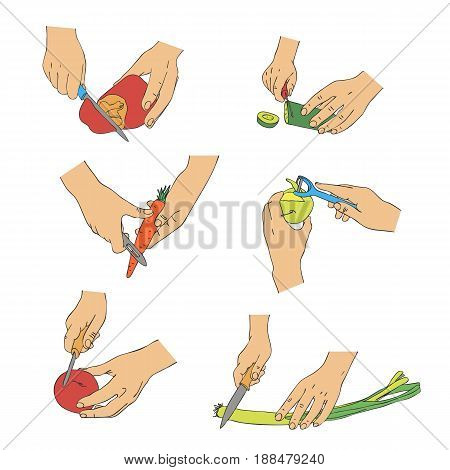 vector cooking hands with knife cutting vegetables, line drawing isolated symbol at white background