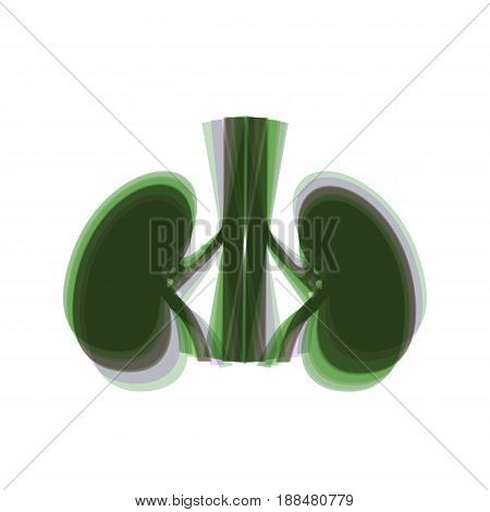 Human anatomy. Kidneys sign. Vector. Colorful icon shaked with vertical axis at white background. Isolated.