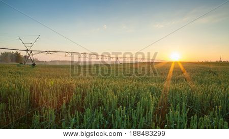 A Movable System Irrigated Wheat In Sunset