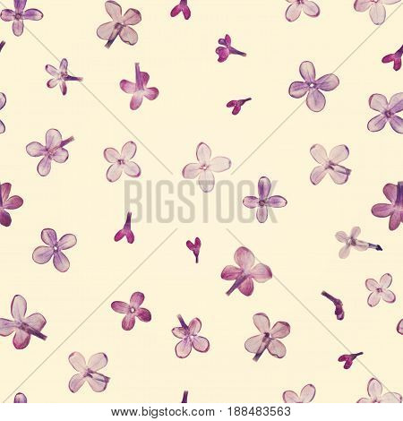 Pressed and dried violet lilac flowers isolated on a cream background pattern. For use in scrapbooking floristry or herbarium.