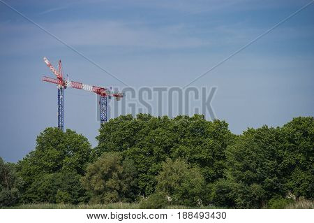 Construction Crane Towering Above The Trees, City And Nature