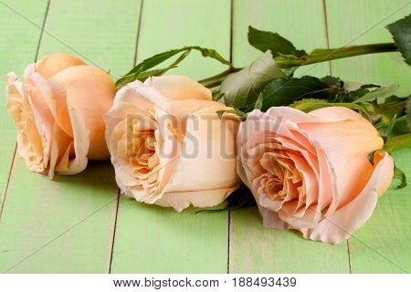 three fresh beige roses on a green wooden background.