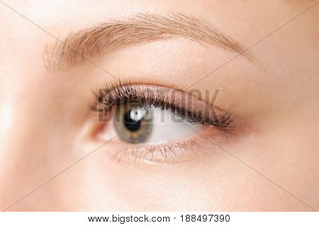 Closeup shot of female eye with day makeup. Perfect eyelashes.