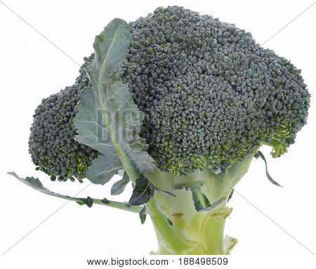 Broccoli isolated on white background vegetarian, vitamin, wholesome, nature, natural, lifestyle