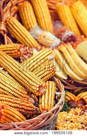 Corn cobs in basket harvest of maize crops selective focus