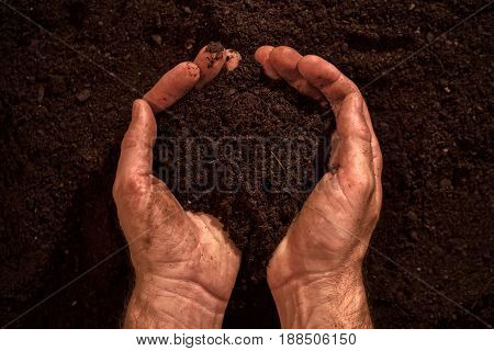 Fertile soil in dirty male hands man holding arable cultivated humus dirt