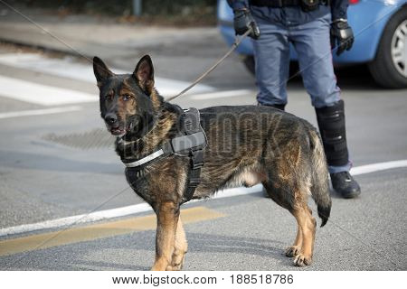 Dog Canine Unit Of The Police And A Police Officer In Uniform Du