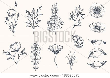 Vector collection of hand drawn plants. Botanical set of sketch flowers and branches