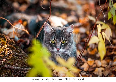 Kitty in the Leaves of the Woods
