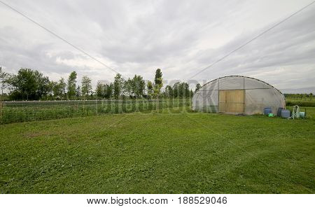 Large Greenhouse For The Cultivation Of Vegetables