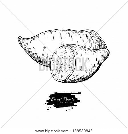 Sweet potato hand drawn vector illustration. Isolated Vegetable engraved style object. Detailed vegetarian food drawing. Farm market product. Great for menu, label, icon