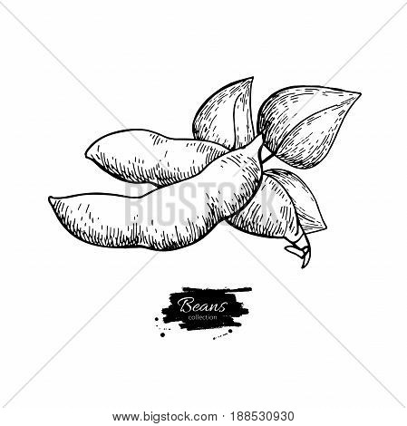 White Bean hand drawn vector illustration. Isolated Vegetable engraved style object. Detailed vegetarian food drawing. Farm market product. Great for menu, label, icon
