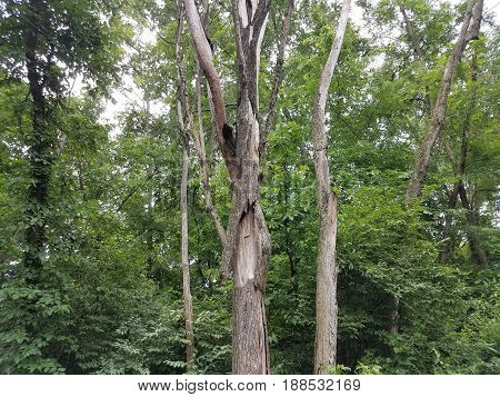 bark falling off of trunk of tree in forest