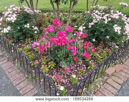 pink and white roses, gravel, and red bricks in park