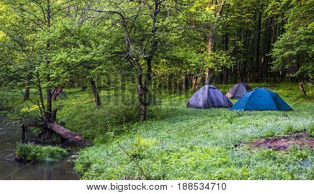 tourist tents in the morning forest near the river