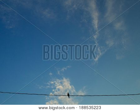Side view of pigeon on railing looking at camera with blurred background
