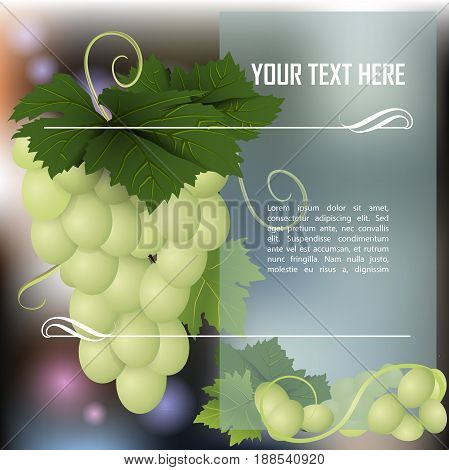 Bunch of white grapes.Ripe grape. Place for text. Vector illustration.