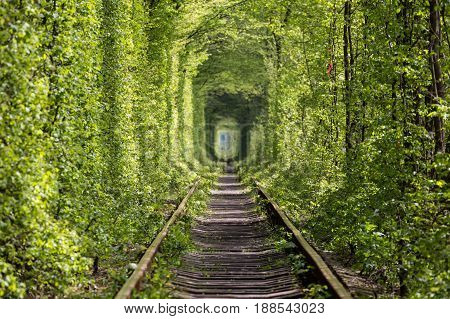 Beautiful tunnel of green trees . Tunnel of love. Natural miracle. Old abandoned railway line in the alley of green trees. Tourist facility. Settlement Klevan. Rivnenskaya region. Ukraine.