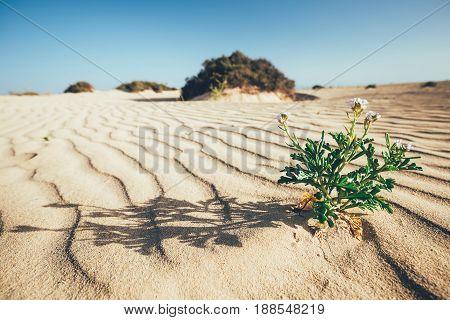 Lines In The Sand Of A Beach, Grande Dunes, Fuerteventura