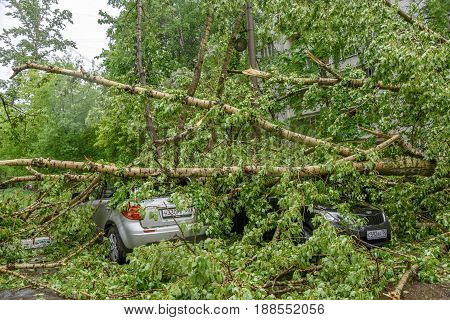 MOSCOW, RUSSIA - MAY 29, 2017: Gigantic fallen poplar tree toppled and crushed parked cars as a result of the severe hurricane winds in one of courtyards of Moscow city
