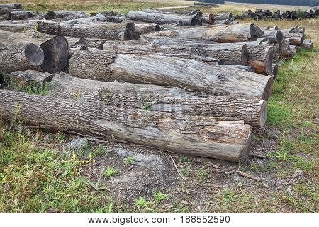 Depots for timber with cut trunks of trees